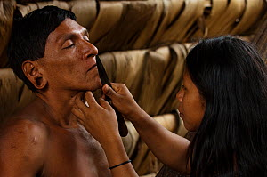 Huaorani man being shaved by his daughter. Gabaro Community, Yasuni National Park, Ecuador, June 2007. Model release #GA02 and #GA09.  -  Pete Oxford