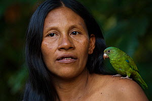 Huaorani Indian woman with her pet Cobalt-winged Parakeet (Brotogeris cyanoptera). Gabaro Community, Yasuni National Park, Ecuador, June 2007. Model release #GA12.  -  Pete Oxford