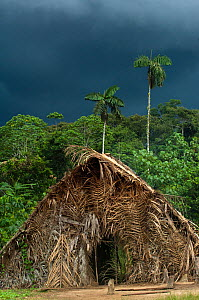 Huaorani Indian house. The houses are made by constructing a frame from cut logs and covering it with palm leaves. Gabaro Community, Yasuni National Park, Ecuador, June 2007.  -  Pete Oxford