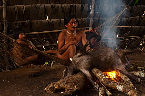 Huaorani Indian burning the hair off of a peccary before cutting it up to either boil or smoke it. Bameno Community, Yasuni National Park, Ecuador, May 2007. Model release #5. - Pete Oxford