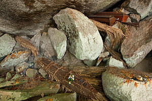 Mopoyo burial site. Here the bodies which are bound in palm leaves are placed under a granite overhang or shallow cave. Orinoco River, Apure Province, Venezuela, February 2009. - Pete Oxford