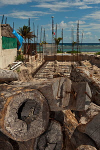 Black Iguana (Ctenosaura similis) in construction site in Mahahual Town which was destroyed in 2007 by Hurricane Dean. Quintana Roo, Yucatan Peninsula, Mexico.  -  Pete Oxford