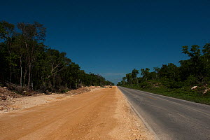 New Road between Felipe Carrillo Puerto & Mahahual. The road links to a planned tourism development in an environmentally sensitive area. Mahahual Peninsula, Quintana Roo, South Yucatan Peninsula, Mex... - Pete Oxford