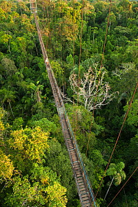 Canopy Walkway, 275m long, 36m high rigid walkway, at Sacha Lodge. Napo River bordering Yasuni National Park, Amazon Rainforest Ecuador.  -  Pete Oxford