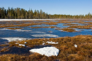 Woodland bog with melting ice and snow, Northern Finland, April 2010  -  Lassi Rautiainen