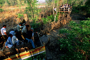 Indian / Asian rhinoceros (Rhinoceros unicornis) being released from transport crate at Royal Bardia NP, after translocation from Chitwan NP, Nepal, 2003  -  JEFF FOOTT