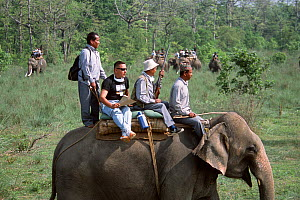 Scientists and dart shooter on Elephant searching for Indian / Asian rhinoceros (Rhinoceros unicornis) for sedation and translocation to Royal Bardia NP, Chitwan NP, Nepal, 2003  -  JEFF FOOTT