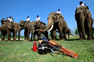 Mahouts on working Elephants before going out to search for Indian / Asian rhinoceros (Rhinoceros unicornis) for sedation and translocation to Royal Bardia NP, Chitwan NP, Nepal, 2003  -  JEFF FOOTT