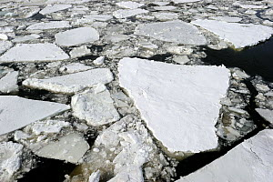 Ice floe melting on St Lawrence River. Quebec, Canada, January 2009.  -  Eric Baccega