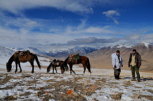Two people standing by their horses on an expedition to find Tien Shan Argali (Ovis ammon karelini). Naryn National Park, Kyrgyzstan, Central Asia, November.  -  Eric Dragesco