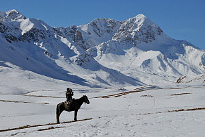 Man riding horse scanning horizon, on expedition to find Tien Shan Argali (Ovis ammon karelini) in vast mountainous landscape. Naryn National Park, Kyrgyzstan, Central Asia, November.  -  Eric Dragesco