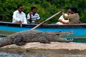 Marsh Crocodile or Mugger (Crocodylus palustris), with people taking a boat-ride in the background. Cauvery river, Karnataka, India.  -  Axel Gomille