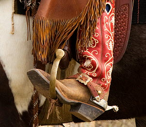 Close up of boot and spurs of Cowboy riding domestic horse,  Sombrero Ranch, Colorado, USA, May 2010, model released  -  Carol Walker