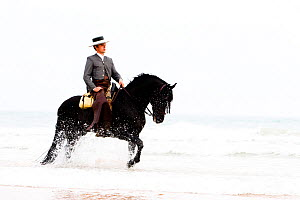 Spanish / Andalusian horse performing Alta Escuela moves, walking through waves on beach, Andalucia, Spain, model released  -  Carol Walker