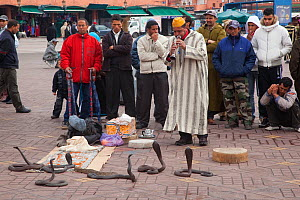 Snake charmer entertaining a small crowd. Marakesh, Morocco, March.  -  Ernie Janes