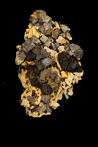 Galena (PbS, lead sulfide), the primary ore of lead; and spalerite (black), an ore of zinc. Sample from Tri State District, Joplin Missouri, USA.  -  John Cancalosi