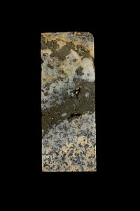 Drill core sample showing quartz and pyrite in granite base rock. Sample from Butte, Montana, a site of rich copper deposit.  -  John Cancalosi