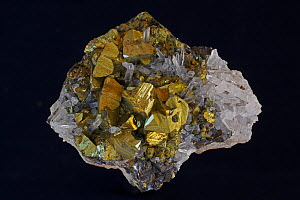 Chalcopyrite (CuFeS2, copper iron sulfide), a very important economic ore (Golden variety). Sample from Peru.  -  John Cancalosi
