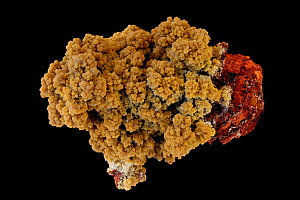 Mimetite, a lead arsenate chloride mineral, forms as a secondary mineral in lead deposits, Resembles the mineral pyromorphite. Industrially a minor ore of lead, a popular collector's specimen. Sample...  -  John Cancalosi