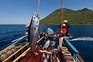 Funae fishermen catching Skipjack tuna near Manado Tua using anchovies as live bait. Indonesia, October 2009. - Jurgen Freund