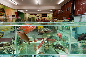 Live reef fish in tanks beside seafood restaurants, Lei Yue Mun harbour, Hong Kong, China, April 2009. - Jurgen Freund