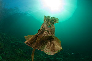 A discarded dress settling on the seabed becoming a marine life habitat, West Papua, Indonesia - Jurgen Freund
