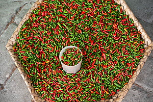 Red and green Chillis for sale at the vegetable market in Dili, East Timor, August 2010 - Jurgen Freund