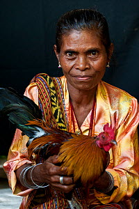 Portrait of East Timorese woman in traditional clothing with chicken, Maubara, East Timor, August 2010.  -  Jurgen Freund