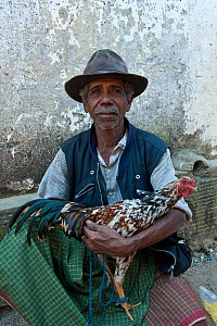 Portrait of East Timorese man in traditional clothing with chicken for cockfight, Maubara, East Timor, August 2010.  -  Jurgen Freund