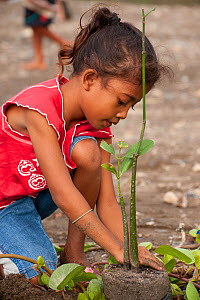 Child planting a mangrove shoot, Mangrove reforestation project in Dili, East Timor, August 2010.  -  Jurgen Freund