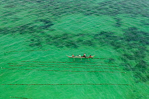Aerial view of a seaweed farmer tending his crop, growing agar-agar for processing into carageenan (gelatinous extracts used as binder for food or product) Philippines, May 2009.  -  Jurgen Freund
