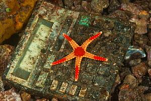 Necklace sea star (Fromia monilis) resting on discarded adding machine, pollution of coastal waters, Moluccas Islands, Indonesia  -  Jurgen Freund