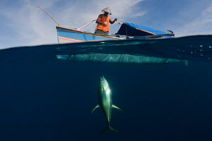 Fisherman on outrigger boat catching Yellowfin tuna with hook and line. Sulawesi, Indonesia, December 2009. Fishermen fish close to a fish attracting device, some remain at sea for up to 2 months.  -  Jurgen Freund