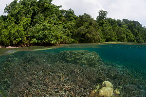 Split level view of coral reef and rainforest on Tetepare island, the largest uninhabited island in the South Pacific, Solomon Islands, July 2010. - Jurgen Freund