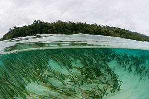 Split level view of seagrass beds and Tetepare island, the largest uninhabited island in the South Pacific, Solomon Islands, July 2010, Seagrass beds of Tetepare Island attracts dugong who feed here r... - Jurgen Freund