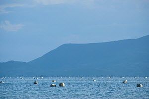 Jewelmer Pearlfarm, floats holding oyster cages in open water, Palawan, Philippines, May 2009  -  Jurgen Freund