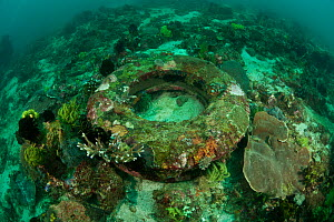 Old rubber tyre turned artificial reef, Komodo NP, Indonesia, August 2009 - Jurgen Freund