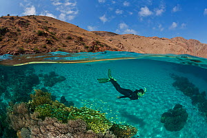Split level of snorkeler over coral reef on white sandy seabed contrasting with dry topside landscape in background, Komodo NP, Indonesia, August 2009. Model released.  -  Jurgen Freund