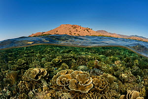 Split level of coral reef with Komodo island in the background, Komodo NP, Indonesia, August 2009. - Jurgen Freund