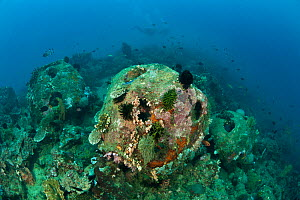 Artificial reef balls that have been in place for about 10 years with some encrusting corals, North Sulawesi, Indonesia, October 2009.  -  Jurgen Freund