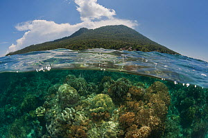 Coral reefs of Bunaken National Park, split level with the Manado Tua island in the background, North Sulawesi, Indonesia, October 2009.  -  Jurgen Freund