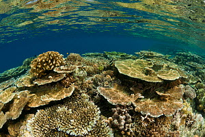 Healthy coral reef in the shallows, West New Britain, Papua New Guinea.  -  Jurgen Freund