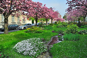 Wide middle strip / central reservation between roads made into a garden with flowering Cherry (Prunus) trees and water feature, Ghent, Belgium. April 2011.  -  Philippe Clement