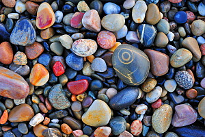 Colourful water-smoothed pebbles on shingle beach. Normandy, France, October 2010. - Philippe Clement