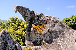 """Bronze age granite quarry at Filitosa with weathered """"dinosaur"""" rock. Corsica, France, June 2010.  -  Nick Upton"""
