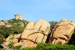 16th Century Genoese watchtower, the largest on Corsica, perched on a rocky headland, surrounded by huge weathered granite boulders and coastal maquis scrub. Campomoro Point, Corsica, France, May 2010... - Nick Upton