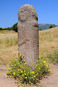 Tall Bronze age (c 3,500 years old) granite statue menhir standing stone at Filitosa with carved face and trace of a sword, with Yellow daisies (Asteraceae) growing around the base. Corsica, France, J... - Nick Upton