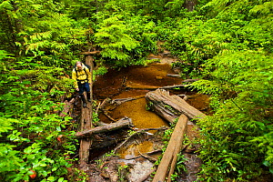 A hiker crossing water over a fallen tree. The West Coast Trail, Pacific Rim National Park, Vancouver Island, Canada, September 2010. Model released. - Matthew Maran