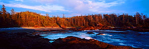A view of a forested inlet lit by low sunlight. Aggro Beach, west coast of Vancouver Island, Canada, September 2010.  -  Matthew Maran