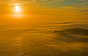 Thick fog shrouding a wooded coastline seen from the air. Barkley Sound, Vancouver Island, Canada, September 2007. - Matthew Maran